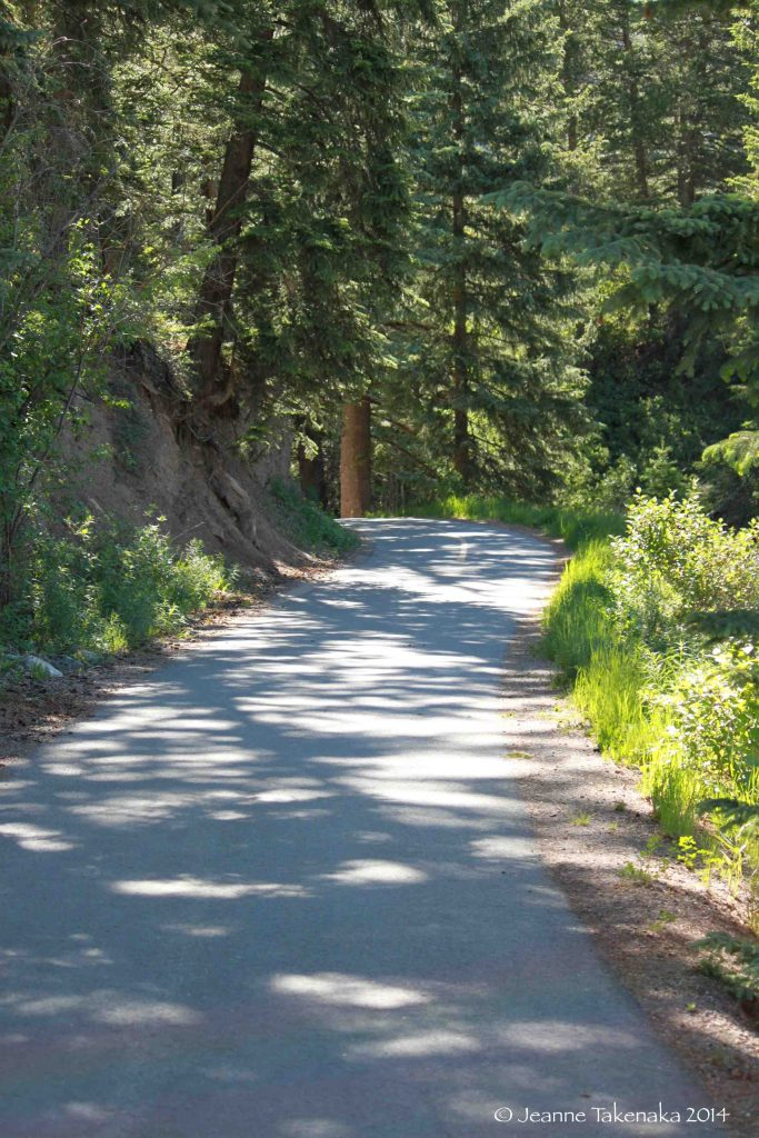 A cement path leading through a forest a visual for what the author describes for her bike ride