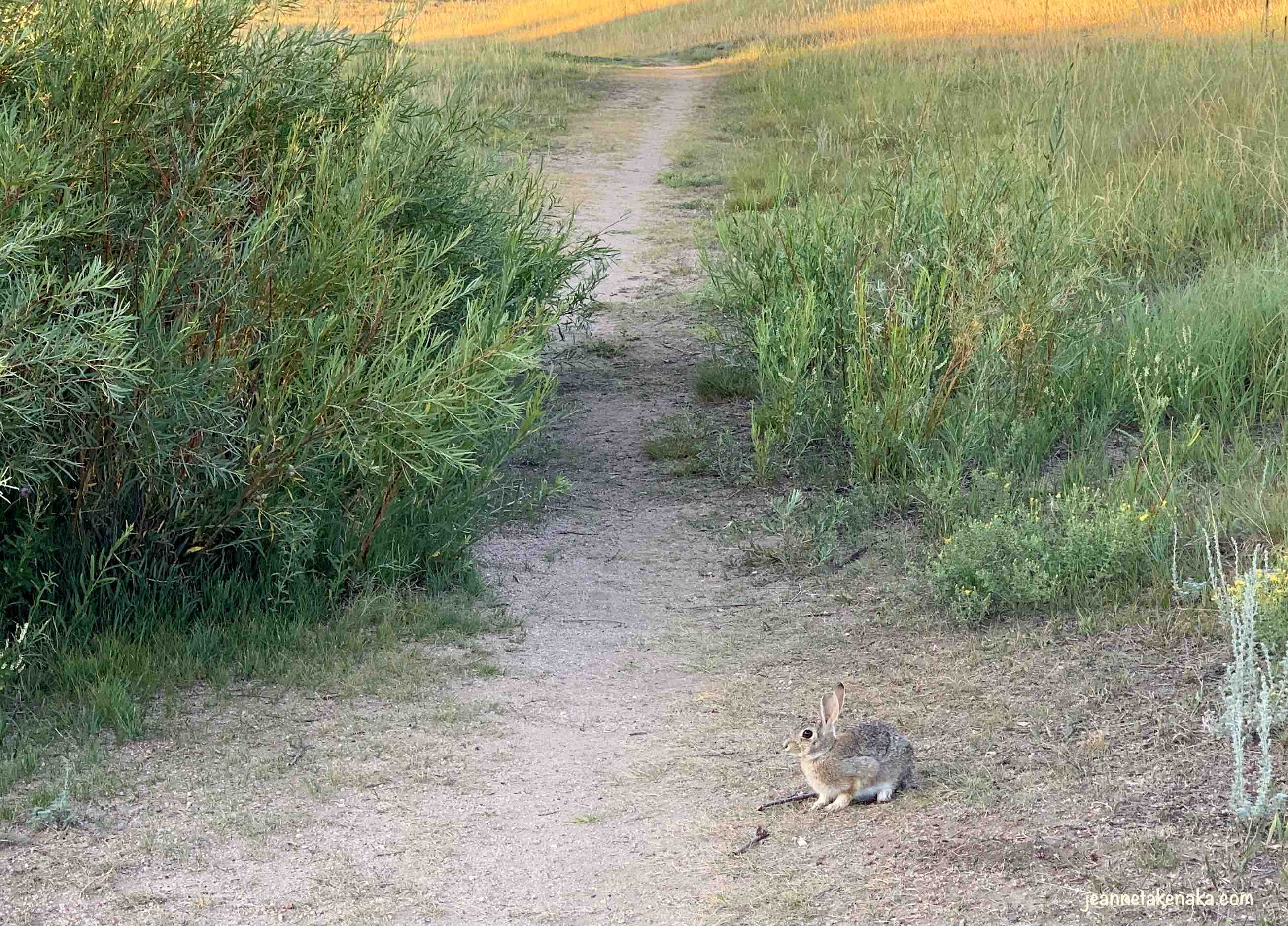 A rabbit sees the writer and prepares to flee in fear