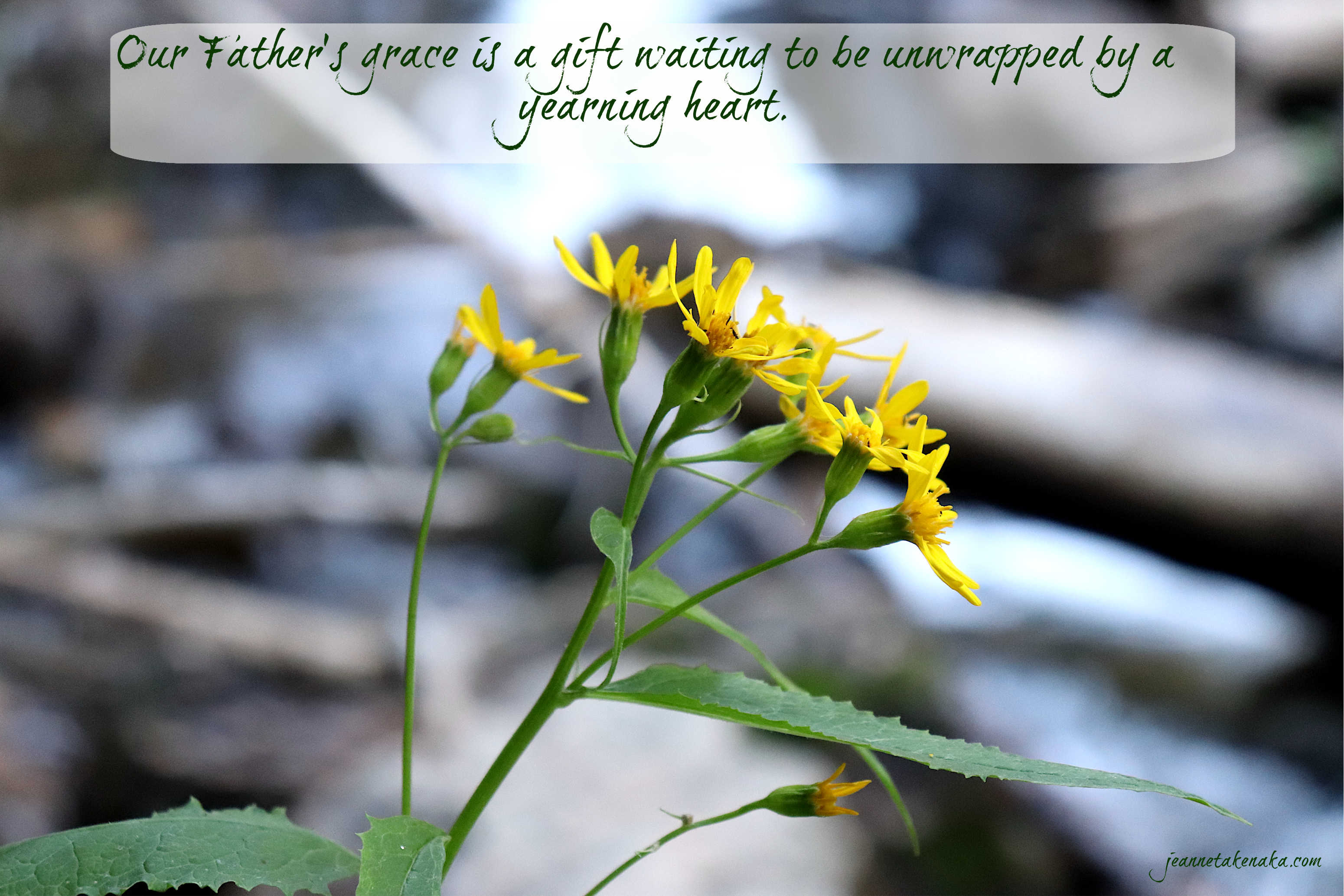 """Meme that says: """"Our Father's grace is a gift waiting to be unwrapped by a yearning heart."""" on a backdrop of yellow flowers and a blurred image of a waterfall."""