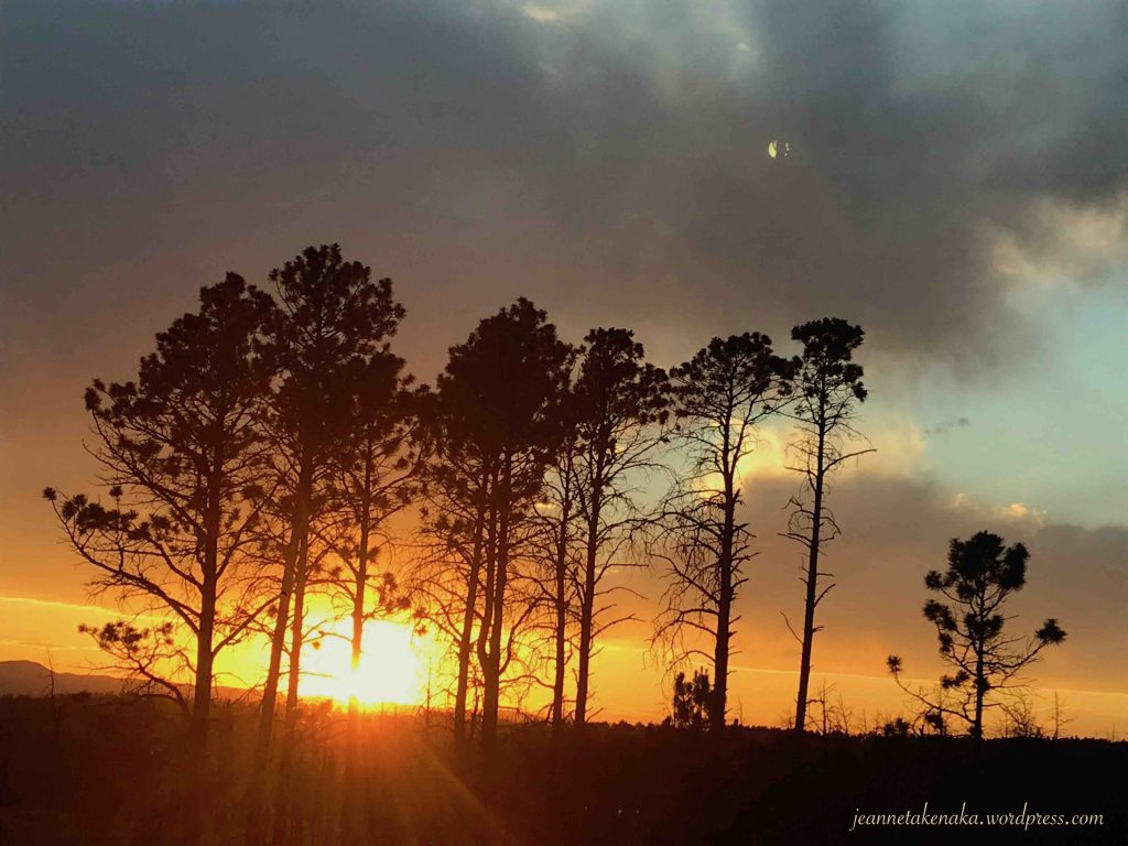 Trees with burn scars silhouetted by a sunset which remind that there is beauty in forgiving that helps us love well