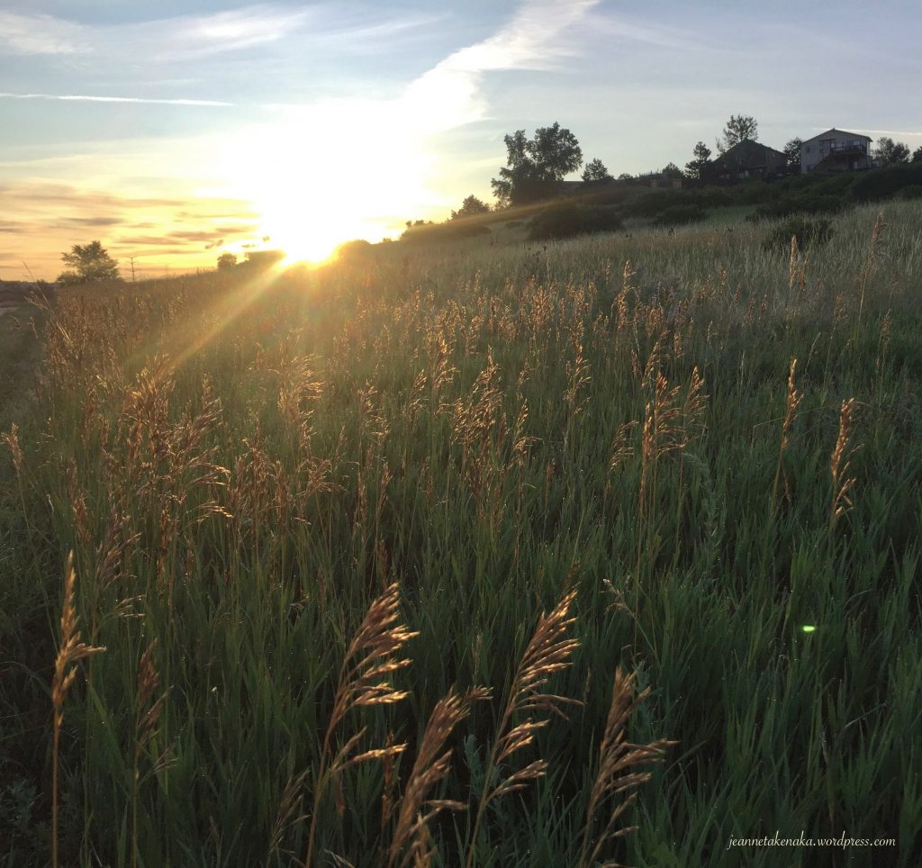 Morning sunlight shining on grasses . . . Jesus is the light we seek when we find our refuge