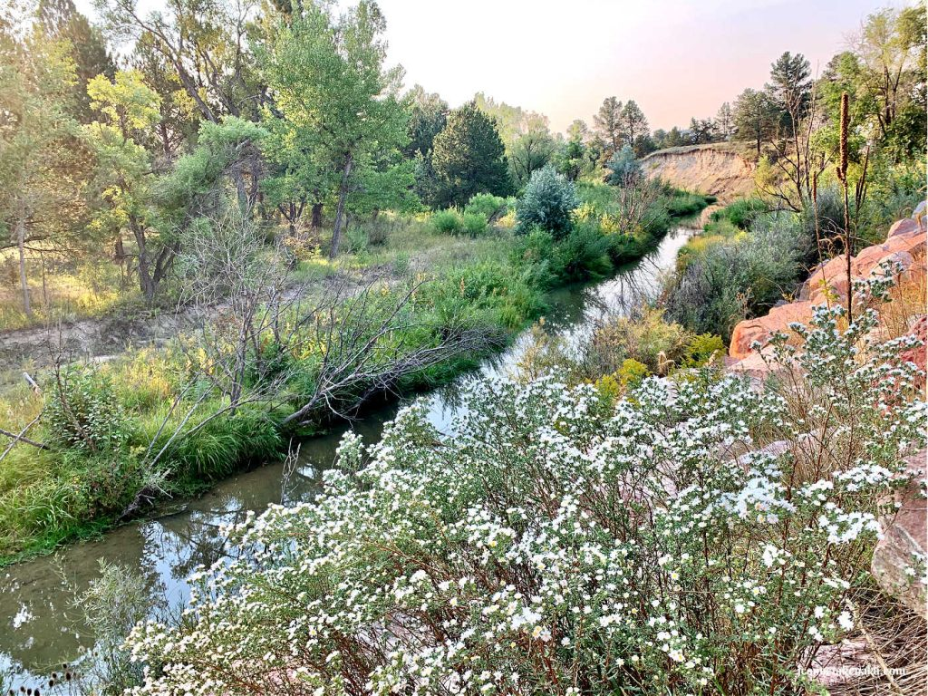 A photo of small white flowers bunched together as they grow near a still stream.