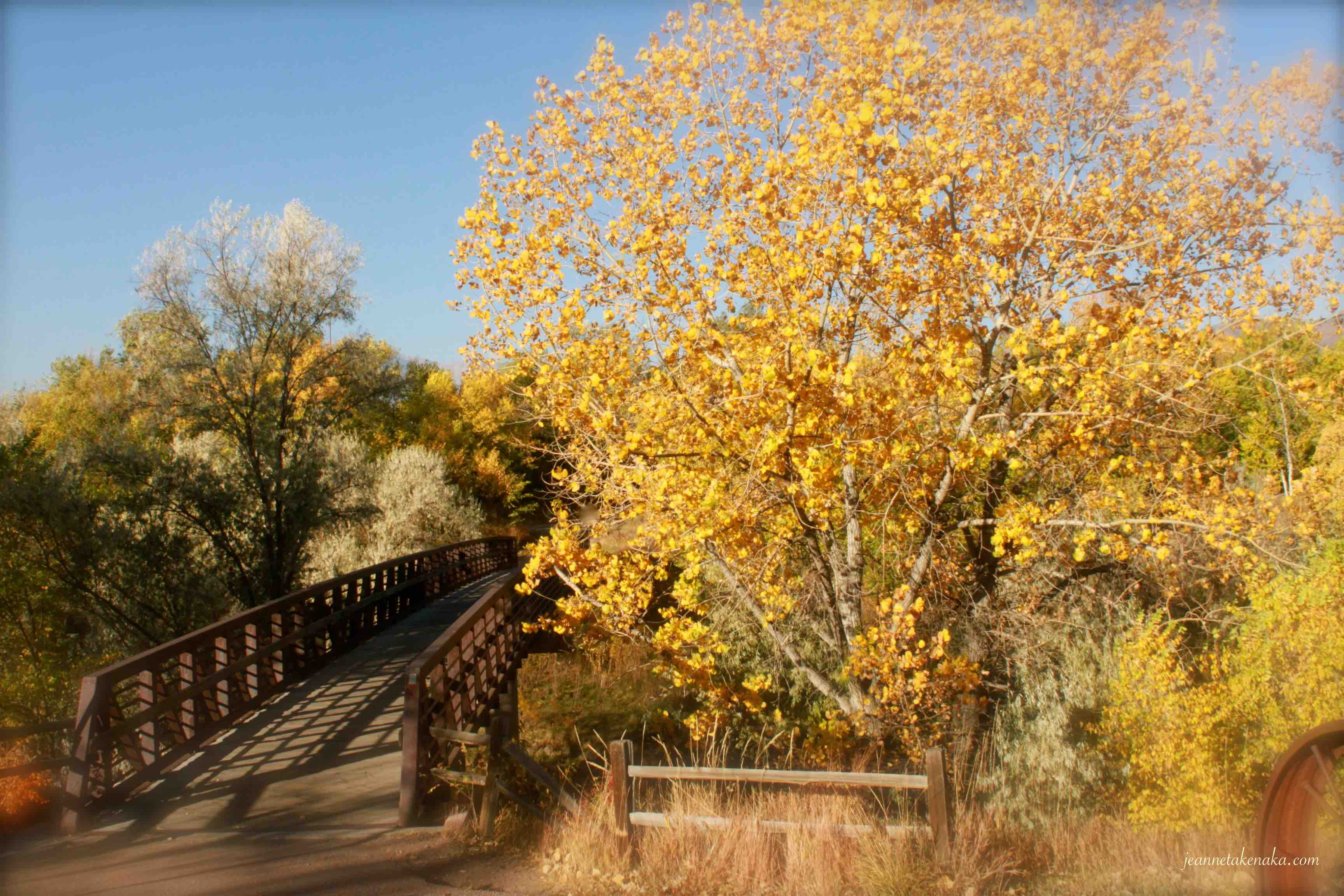 A bridge leading across a river with a tree with yellow leaves on the side