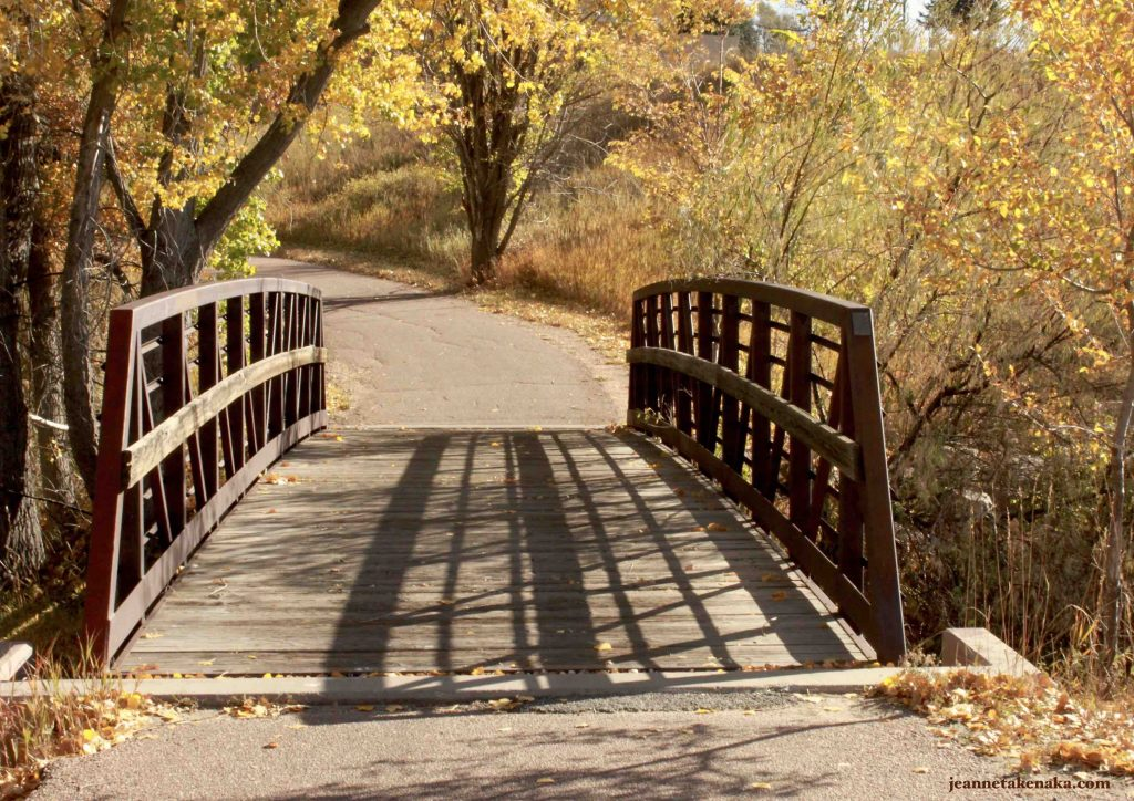 A bridge inviting a person to cross it to walk on a tree-lined path, an invitation to renew our hearts and minds by working through disappointments and regrets