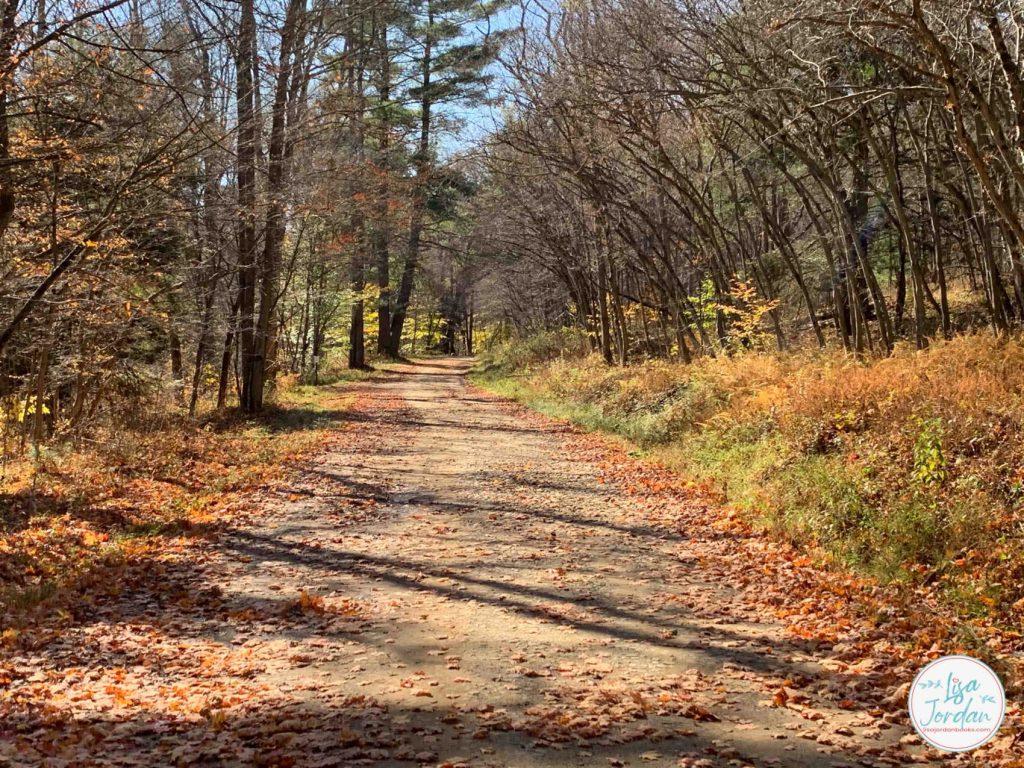 A leaf-strewn path winding between trees