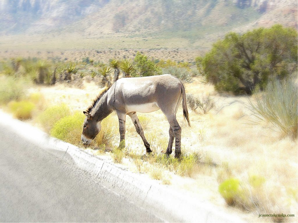 A mule is eating not worried. It trusts God to provide its needs for food.
