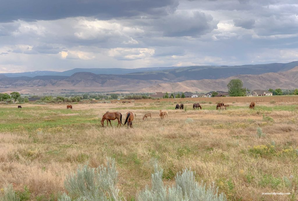 A peaceful scene of horses grazing in a meadow with mountains in the background