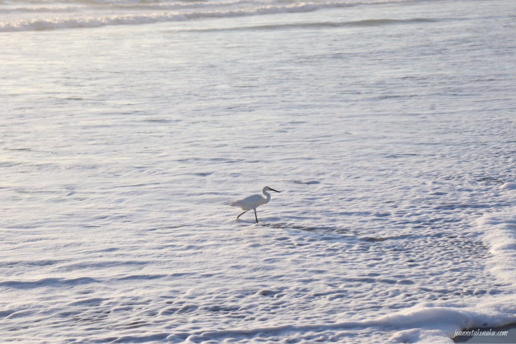 A white bird striding in the frothy waves