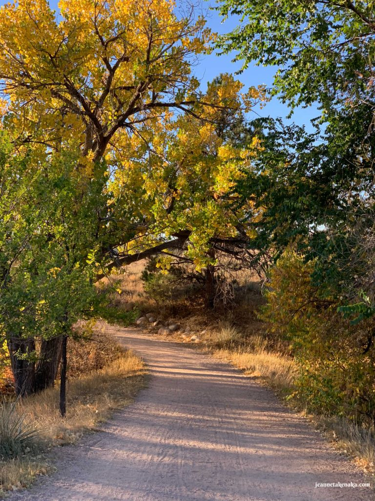 A dirt path leading between tall trees turning colors