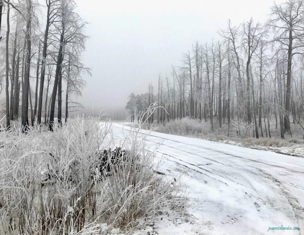 A snowy road with burned trees on each side on a foggy day. Sometimes it's hard to shine our lights in the face of fear