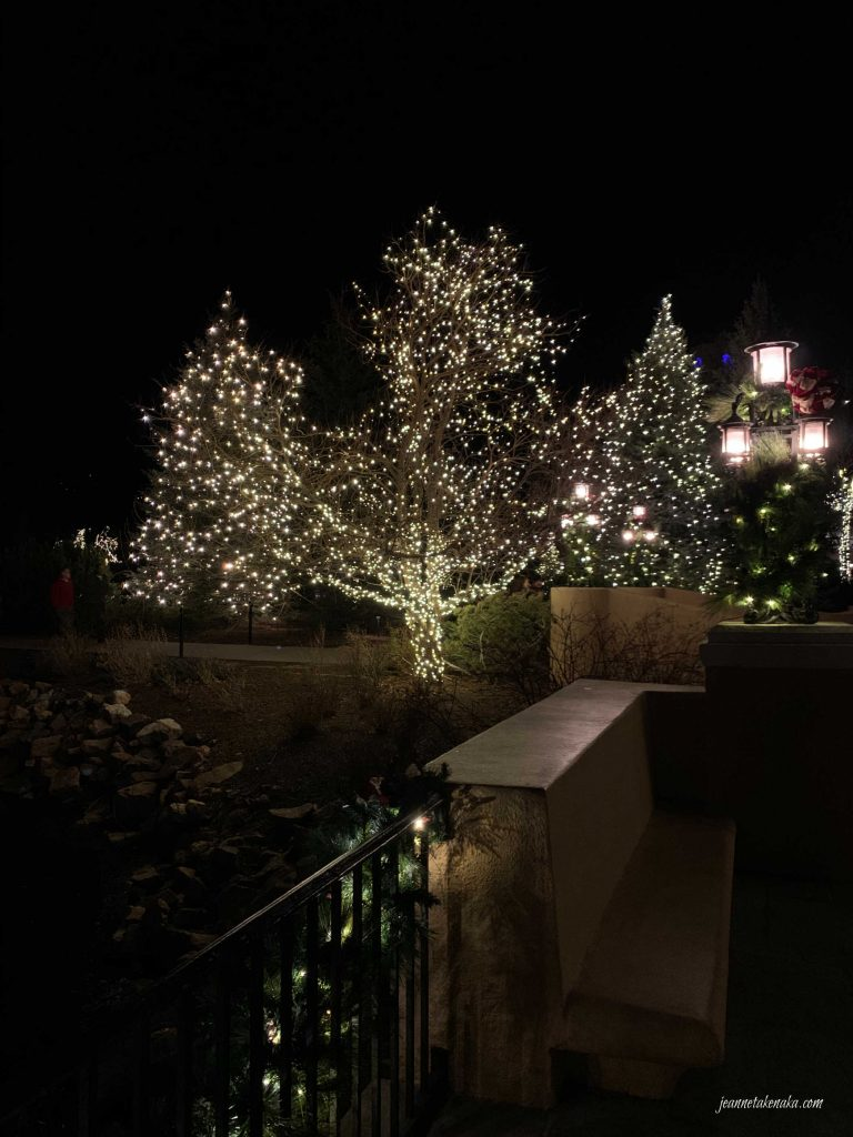 A large lit tree offering light into the dark night.