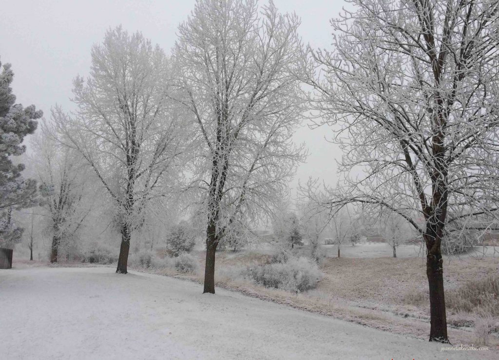 Wintry trees with a gray backdrop remind us that sometimes we feel fearful and alone