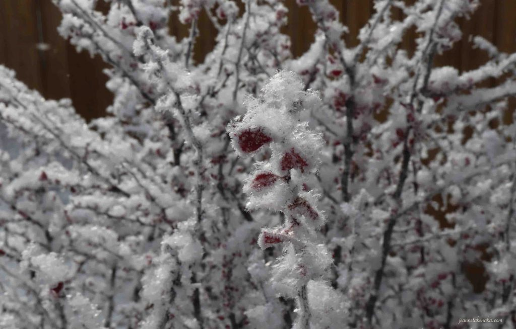 Red leaves peeking out from beneath a fluffy blanket of snow