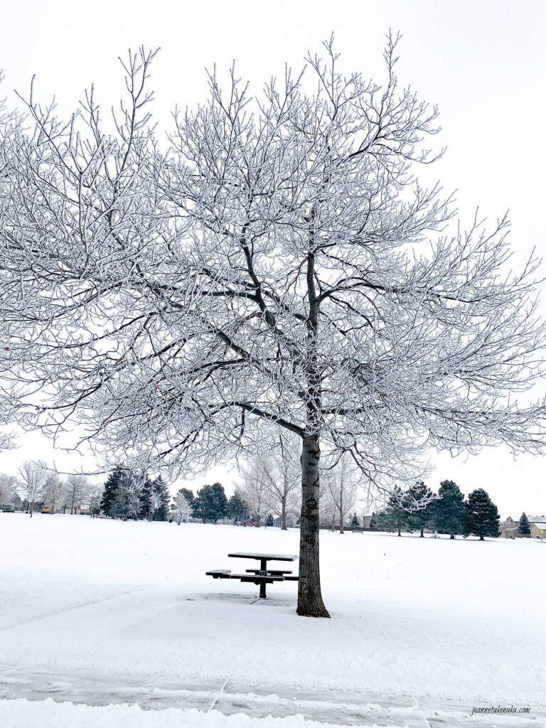 A solitary tree covered in snow . . . symbolic of how a fear of loss might feel . . . isolating.