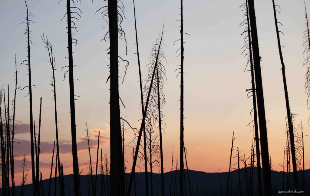 Picture of burned trees at sunset in Yellowstone . . . symbolic of how we sometimes feel when it's hard to forgive