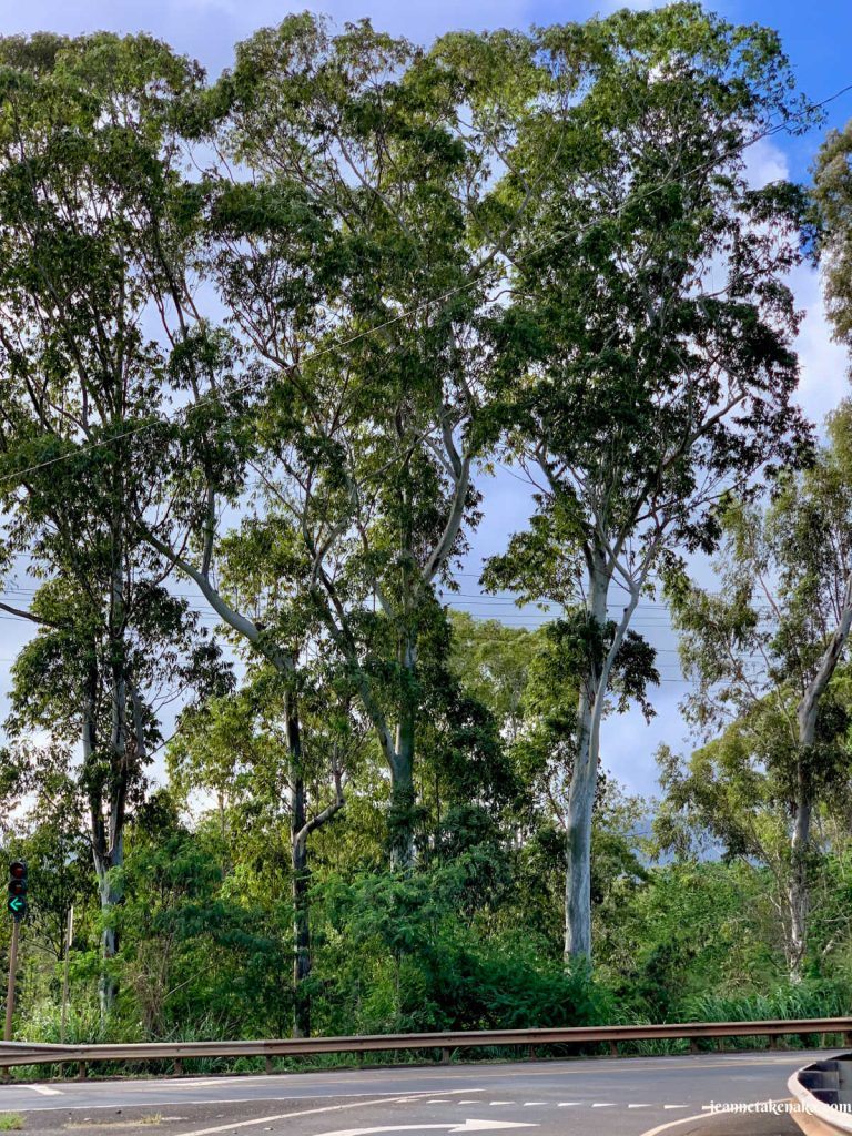 Tall, healthy trees that symbolize the health of a person when they are loving well