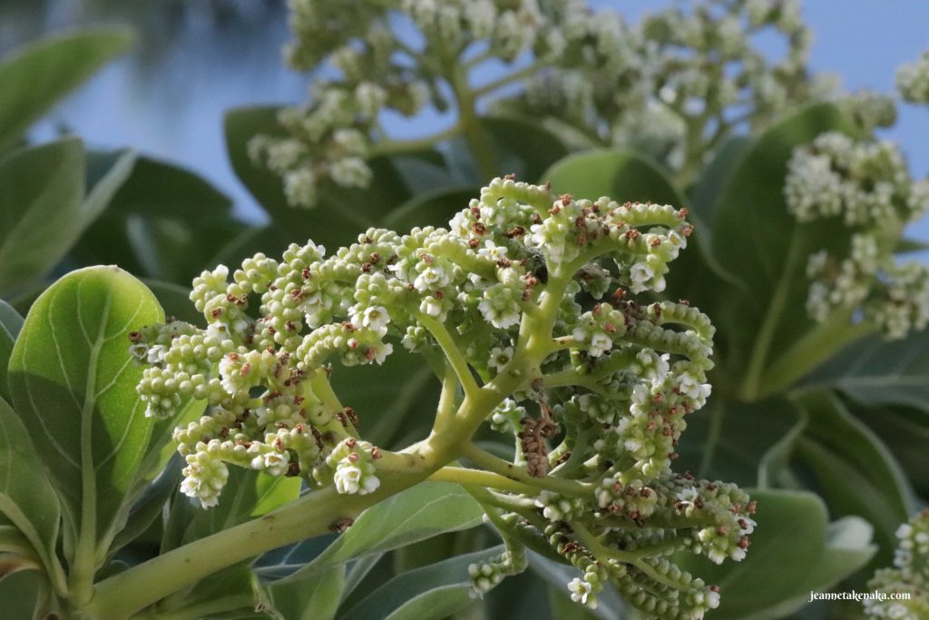 A close up of flower buds, a reminder of my One Word: Known