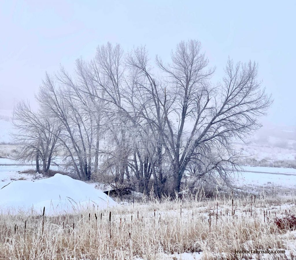 Barren trees on a winter day, a reminder of how fear can make us feel