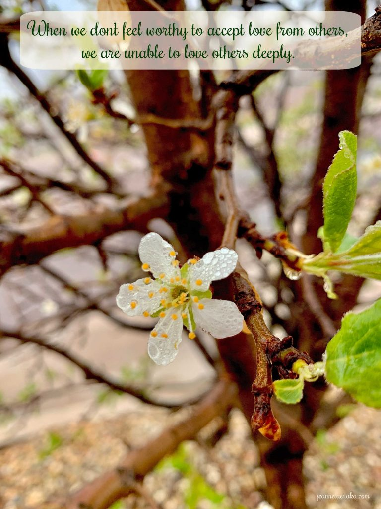 """A meme that says, """"When we don't feel worth to accept love from others, we are unable to love others deeply."""" on a picture of a lone white, rain-dropped bloom on a tree"""