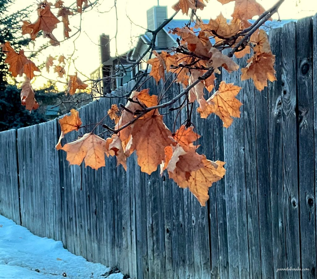 Brown leaves against a wooden fence, a reminder of how we sometimes feel in waiting seasons