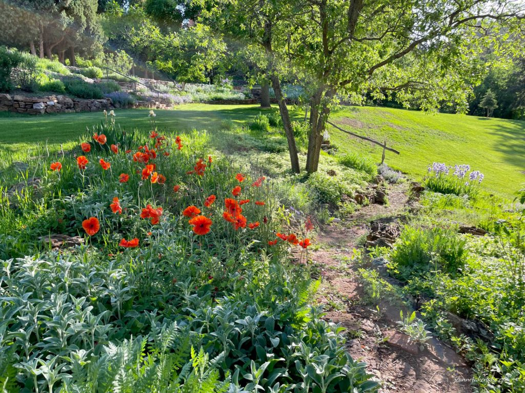 A path framed with poppies and irises and greenery . . . a reminder we can find peace in stressful times