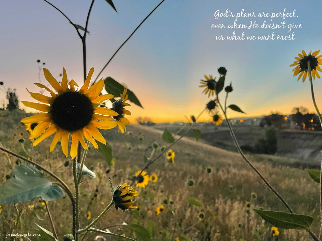 """Meme with the words, """"God's plans are perfect, even when He doesn't give us what we want most."""" on a backdrop of an imperfect black-eyed Susan at sun up."""
