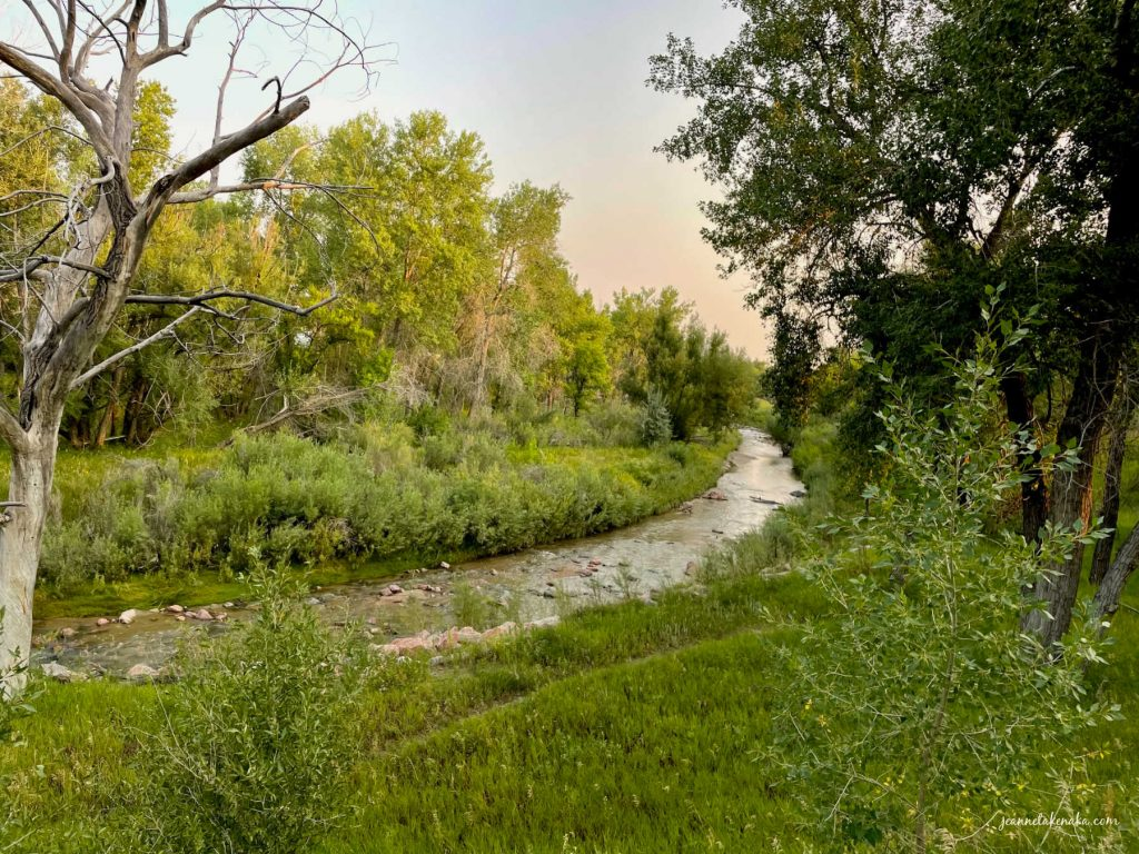 a creek flowing through wooded, grassy space, life keeps going, even when changes occur