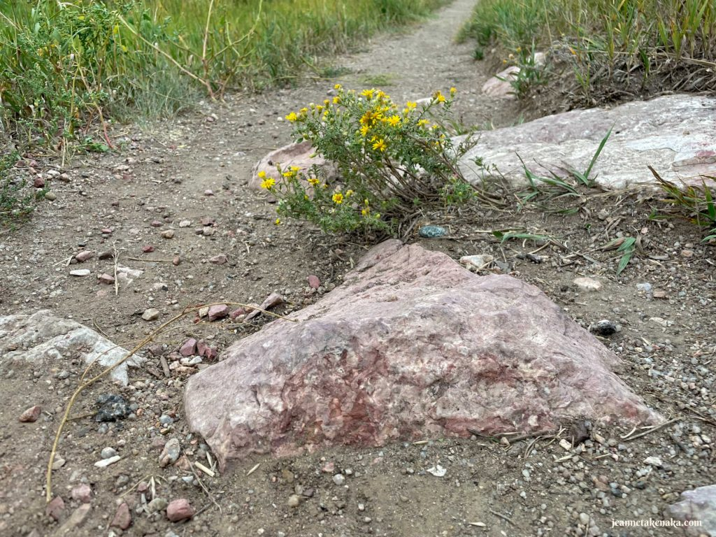 Yellow flowers near a rock on a path . . . a reminder that, when we navigate life changes, we grow, even in hard places