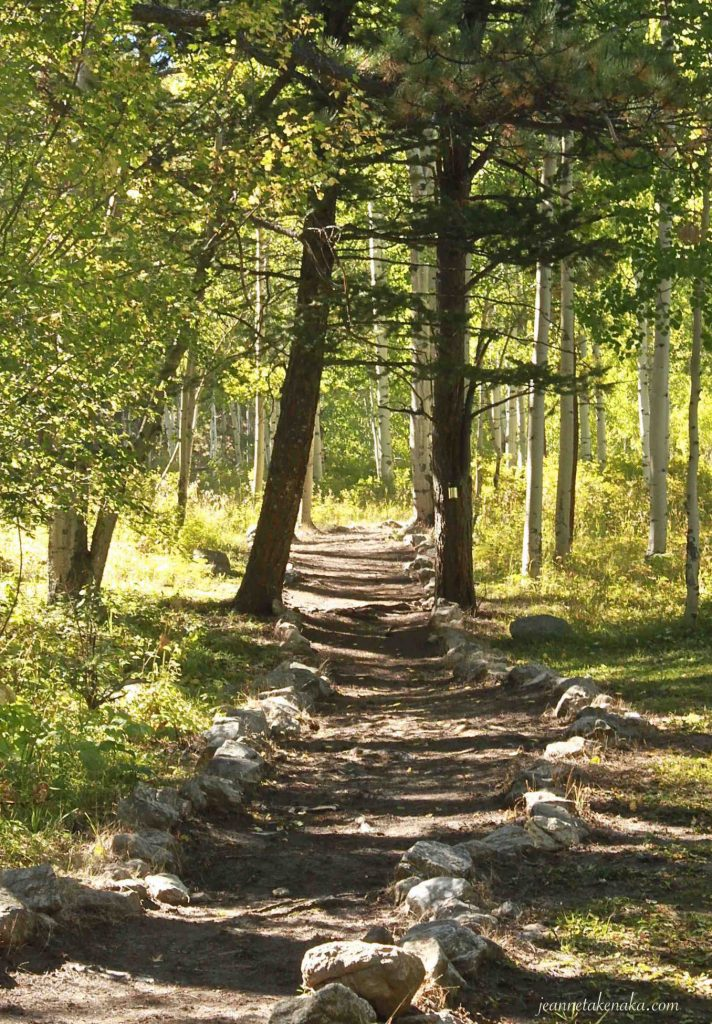 A rock-edged path through a grove of aspens with the sunlight shining through leaves