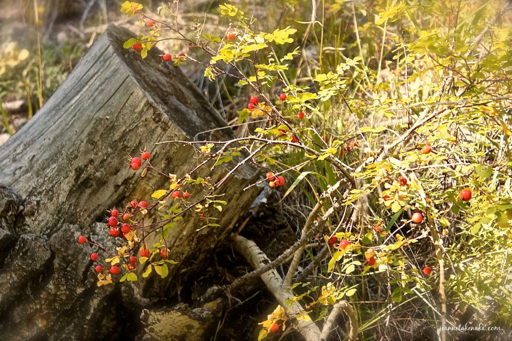 A stump with berries around it . . . even when change comes, we can handle change in a way that brings beauty