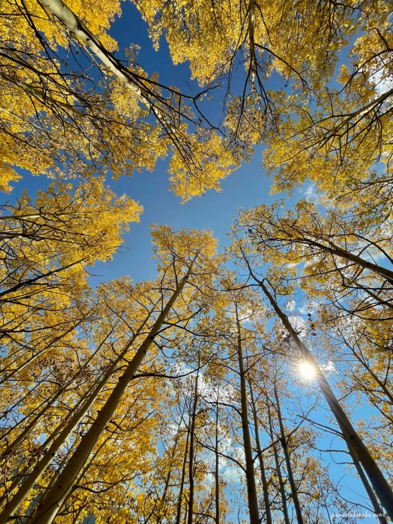 Aspen trees reaching toward blue skies and sunshine . . . a reminder that God shows us beauty when we keep faith in hard times